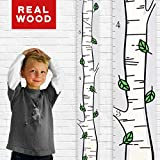 Growth Chart Art | Wooden Birch Tree Growth Chart for Kids [Boys and Girls] - Kids Room Décor Height Chart in 3X Fun Designs - Durable, Portable Birch Tree Décor (Green Leaf Single)