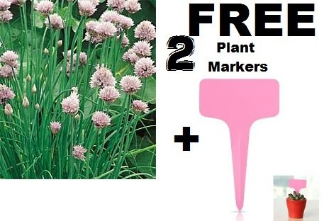 Chives Seeds Herb (Organic) 200+ Seeds Upc 643451294903 +2 Free Plant Markers