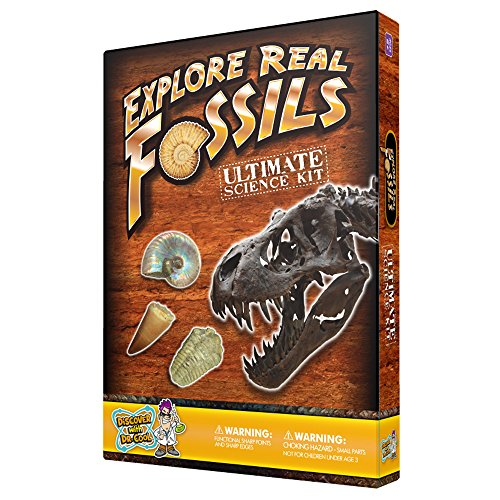 shark fossil kit - 5