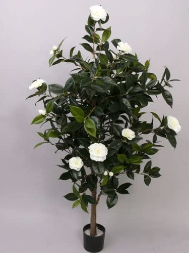 Camellias Camellia Japonica Tree With 786 Sheets 20 White