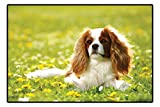 Cavalier King Charles Spaniel Dog Doormat - Spaniel in a Bed of Pretty Yellow Flowers