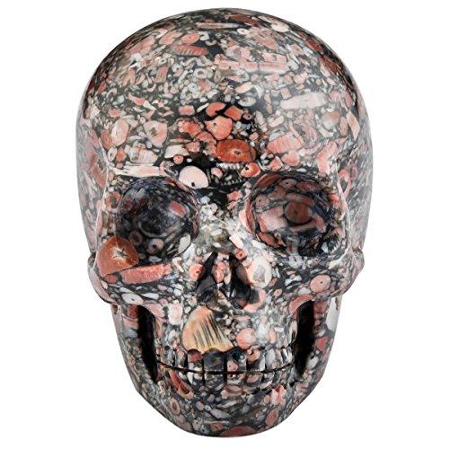 SUNYIK Crinoid Fossil Carving Skull Stone Pocket Statue Figurine Decor 3