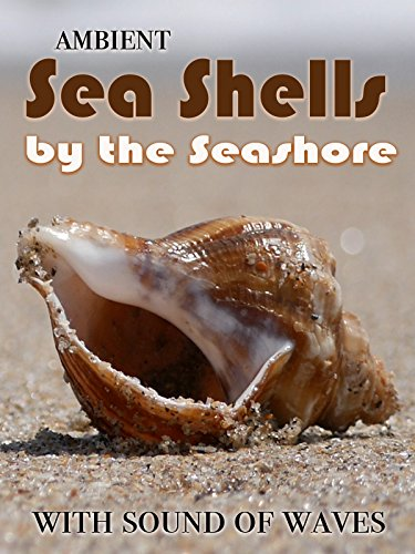 Ambient Sea Shells by the Seashore - with sound of ()