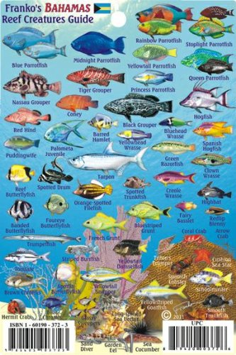 Bahamas Reef Creatures Identification Guide Franko Maps Laminated Fish Card 4