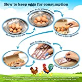 Egg Cartons Set – 12/6 Count Egg Holder – Fresh Eggs Container