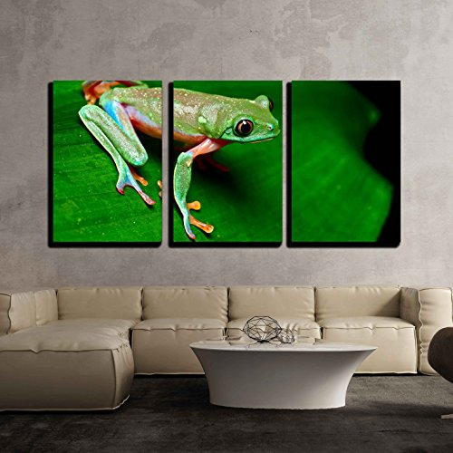 (wall26 - 3 Piece Canvas Wall Art - Tropical Frog on Leaf in Rain Forest of Costa Rica - Modern Home Decor Stretched and Framed Ready to Hang - 16