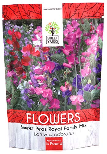 Sweet Pea Seeds Royal Mix - Bulk 1/4 Pound Bag - Over 1,400 Seeds - Large Fragrant Lavender, Purple, Red, Pink and White Blooms -
