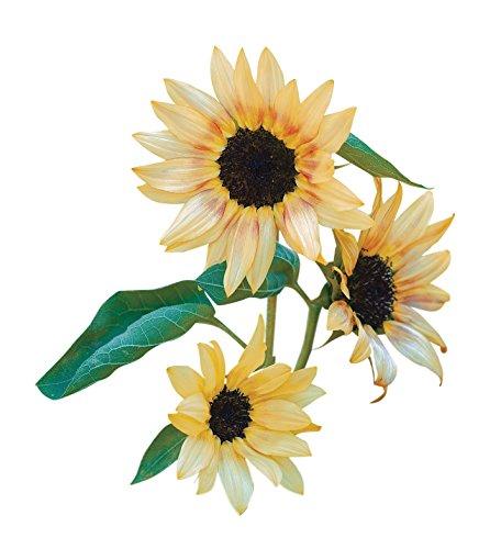 (Burpee Bashful Sunflower Seeds 30 seeds )