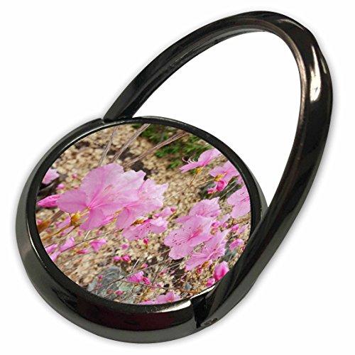 3dRose TDSwhite - Spring Seasonal Nature Photos - Early Spring Pink Flowers - Phone Ring (phr_284256_1)