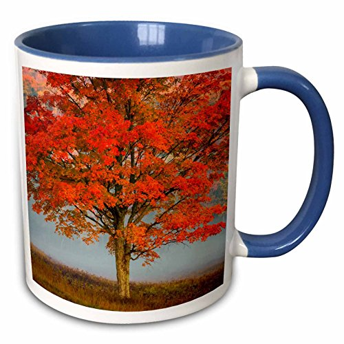 nt - Forests - West Virginia, Canaan Valley State Park. Lone tree and forest in fog. - 11oz Two-Tone Blue Mug (mug_279787_6) ()
