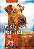 Irish Terrier: Charakter, Erziehung und Gesundheit (Cadmos Hunderassen)