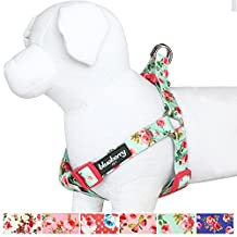 """Blueberry Pet Step-in Spring Scent Inspired Floral Rose Print Turquoise Dog Harness, Chest Girth 16.5"""" - 21.5"""", Small, Adjustable Harnesses for Dogs"""
