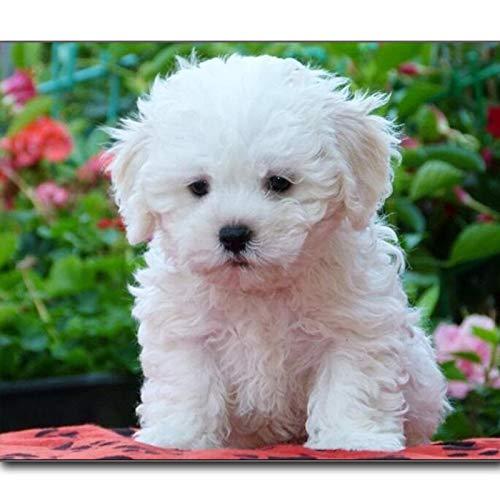 minoristas en línea 80X120CM 80X120CM 80X120CM Diamante Pintura Completa Cuadrada Perros Perros Punto De Cruz Conjunto Pintura De Diamante Animal Picture Home Decor 80X120Cm  100% a estrenar con calidad original.