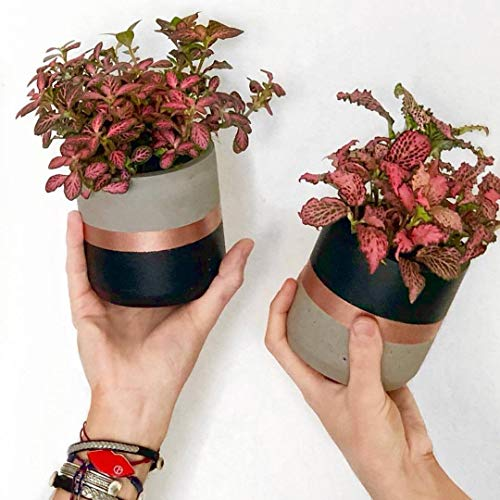 Black and Rose Gold Set of 2 Concrete Round Planters