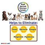 Curaseb Antifungal & Antibacterial Chlorhexidine Shampoo for Dogs & Cats w/ Ketoconazole & Aloe, Effective Against Ringworm, Pyoderma & Allergies, #1 Vet Antifungal Dog Shampoo, Satisfaction Guarantee