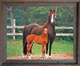 Arabian Mare and Foal Horse Farm Animal Wall Barnwood Framed Picture Art Print (19x23)