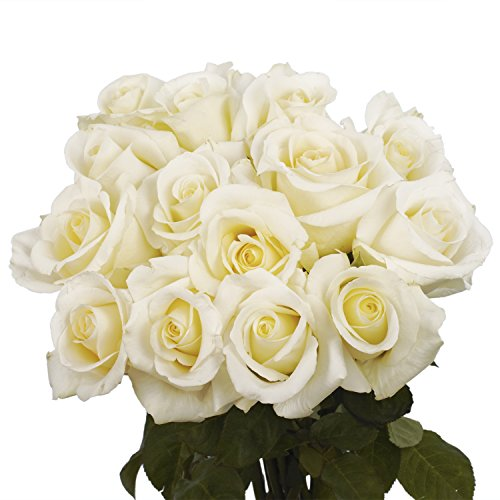 GlobalRose 100 White Roses - Fresh Long Stem Flower - Wholesale Express Delivery (Stem Roses Long Assorted)