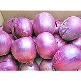 紫玉ねぎ(L~L大)5kg (赤たまねぎ) 北海道産【発送期間】9~3月 【出荷元:北海道四季工房】