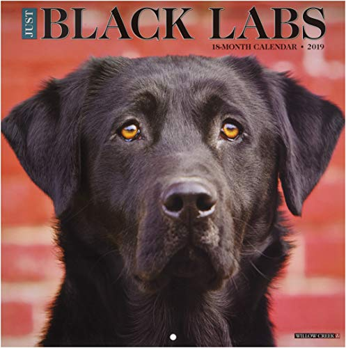 Just Black Labs 2019 Wall Calendar (Dog Breed Calendar)