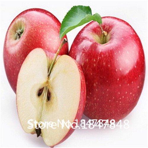 garden-plant-gala-apple-seeds-50-seeds-harvest-delicious-fruit-seeds-backyard-c