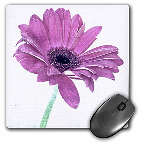 Price comparison product image 3dRose LLC 8 x 8 x 0.25 Inches Mouse Pad, Pink Gerbera Daisy Art-Nature-Flowers (mp_39232_1)