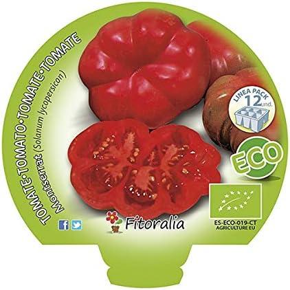 Plantel de tomate Montserrat ecológico: Amazon.es: Jardín