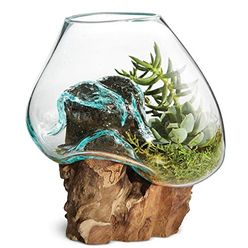 OMA Hand Blown Molten Glass & Teak Wood Terrarium/Vase/ Fish Bowl - Premium Quality (6 Inch) -