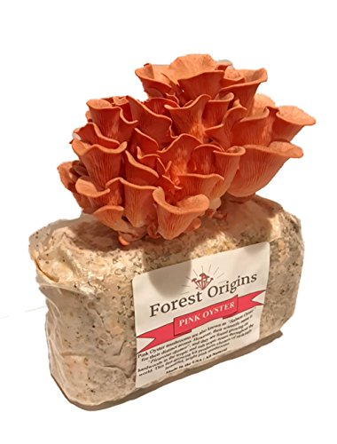 (Pink Oyster Mushroom Farm - Beautiful Mushroom Growing Kit - All in One Indoor Growing Kit - Exotic)