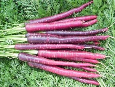 David's Garden Seeds Carrot Cosmic Purple ED121W (Purple) 500 Organic Heirloom Seeds