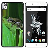 A-type Colorful Printed Hard Protective Back Case Cover Shell Skin for ONEPLUS X (Green Toad Forest Leaf Tropical)