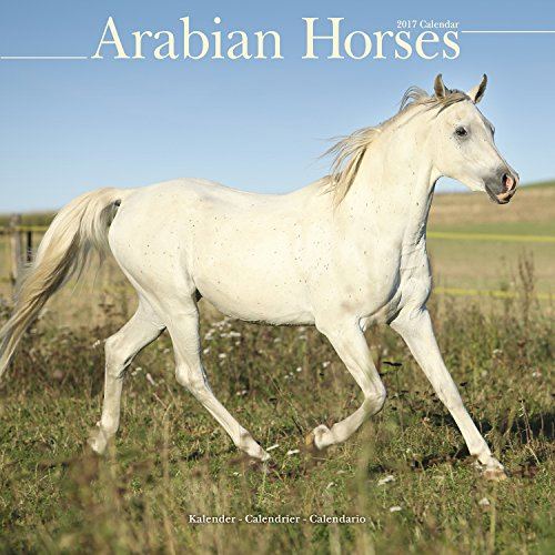 Arabian Horse Calendar - Calendars 2016 - 2017 Wall Calendars - Only Arabian Horses - Animal Calendar - Arabian Horses 16 Month Wall Calendar by Avonside