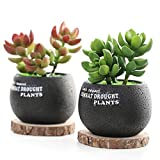 Twins Artificial Potted Fake Succulent Plants Decoration, Small, 3.5 x 5 inch, Set of 2
