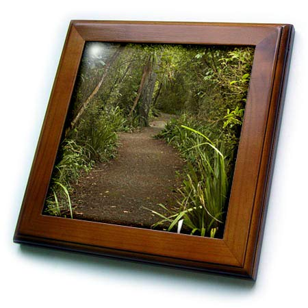 3dRose Danita Delimont - New Zealand - Forest Path, Thompsons Bush, Invercargill, South Island, New Zealand - 8x8 Framed Tile (ft_312950_1) (Best Hiking Trails In New Zealand South Island)