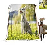 Cranekey Alaskan Malamute Sherpa King Blanket Klee Kai Puppy Sitting on Grass Looking Up Friendly Young Cute Animal for Bed or Couch Ultimate Sherpa Throw Multicolor W59xL47 inches 7