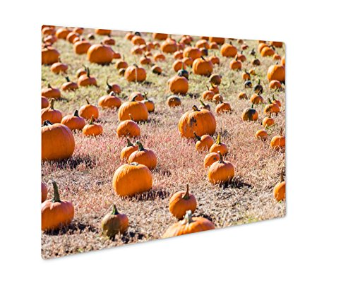 Ashley Giclee Pumpkin Patch, Wall Art Photo Print On Metal Panel, Color, 8x10, Floating Frame, AG6121516 -