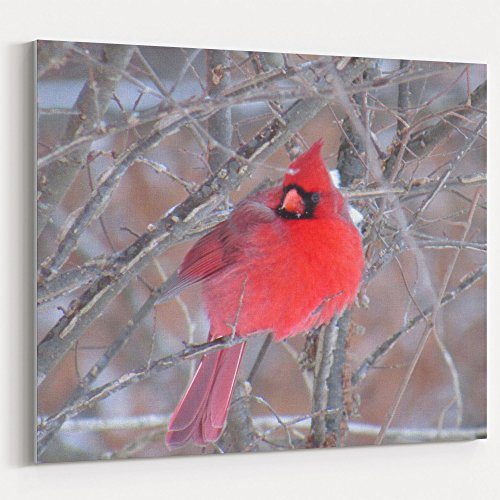 Westlake Art - Bird Cardinal - 30x40 Canvas Print Wall Art - Canvas Stretched Gallery Wrap Modern Picture Photography Artwork - Ready to Hang 30x40 ()