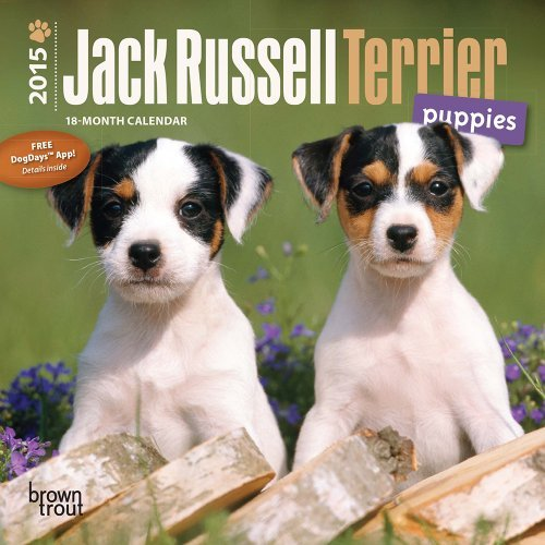 Used, Jack Russell Terrier Puppies 2015 Mini 7x7: Written for sale  Delivered anywhere in Canada
