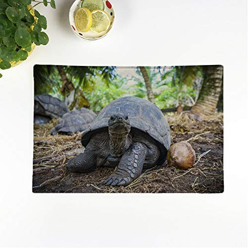 Awowee Set of 4 Placemats Africa Giant Tortoise Seychelles Animal Wildlife Beautiful Beauty Close Non-Slip Doily Place Mat for Dining Kitchen Table (Difference Between Turtle And Tortoise In English)