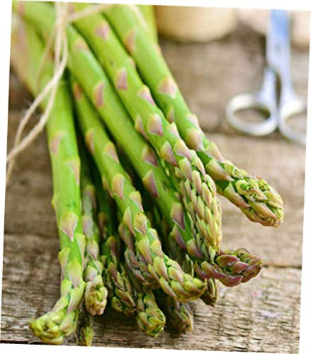 QIM 10 Bare Root Live Asparagus Bare Root Plants -2yr-Crowns - RK198 by QIM