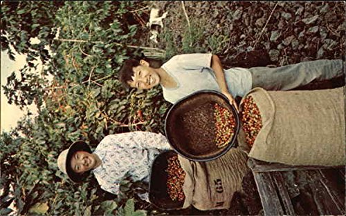 School Vacations Coincide With Harvests so the Youngsters Can Help to Pick Coffee Beans Original Vintage Postcard