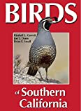 Search : Birds of Southern California