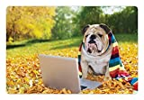 english bulldog bed - Ambesonne English Bulldog Pet Mat for Food and Water by, Dog in the Park with a Laptop and Rainbow Colored Scarf Funny Photography, Rectangle Non-Slip Rubber Mat for Dogs and Cats, Multicolor