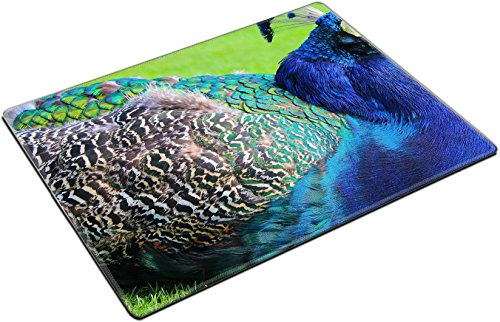 MSD Place Mat Non-Slip Natural Rubber Desk Pads design 34854602 ll Colorful Blue Peacock at Rest with Green Background at Beacon Hill Park Vancouver