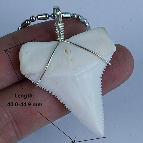 Real sharks tooth necklace 16 inch great white megalodon tooth real sharks tooth necklace 16 inch great white megalodon tooth handmade surfer pendant animal tooth jewelry aloadofball Gallery