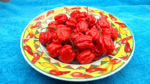 Carolina Reaper Pepper 10+ Seeds