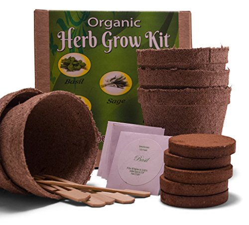 Organic 5 Herb Garden Seeds Starter Kit - Grow Cilantro, Parsley, Thyme, Sage and Basil Plant - Seedlicious gardening set includes everything a kitchen gardener needs for great indoor culinary herbs - Sage Herb Plant
