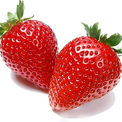 Saulee 500pcs/ Bag Strawberry Seed - Productive Fruit Plant Organic DIY Plant Seeds for Home Garden : Garden & Outdoor