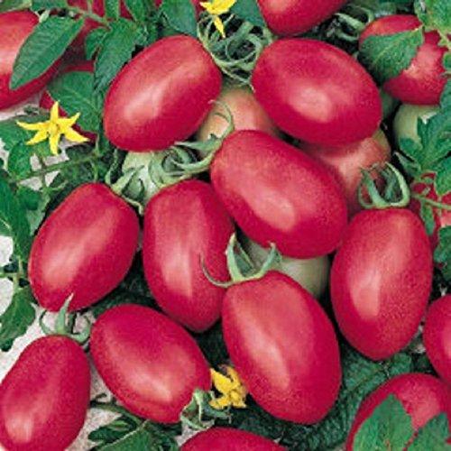 porter tomato - 5