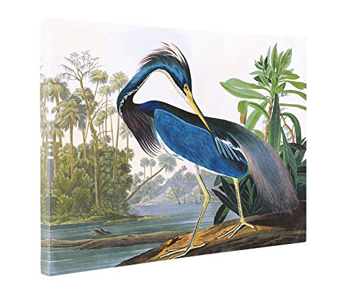 - Niwo Art (TM - Louisiana Heron by John James Audubon. The Birds of America Reproductions. Giclee Print Acrylic Coating on Canvas for Home Decor (30 x 20 x 1.5 Inch)