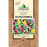 Pyramid Seeds Seeds Celosia Plumosa